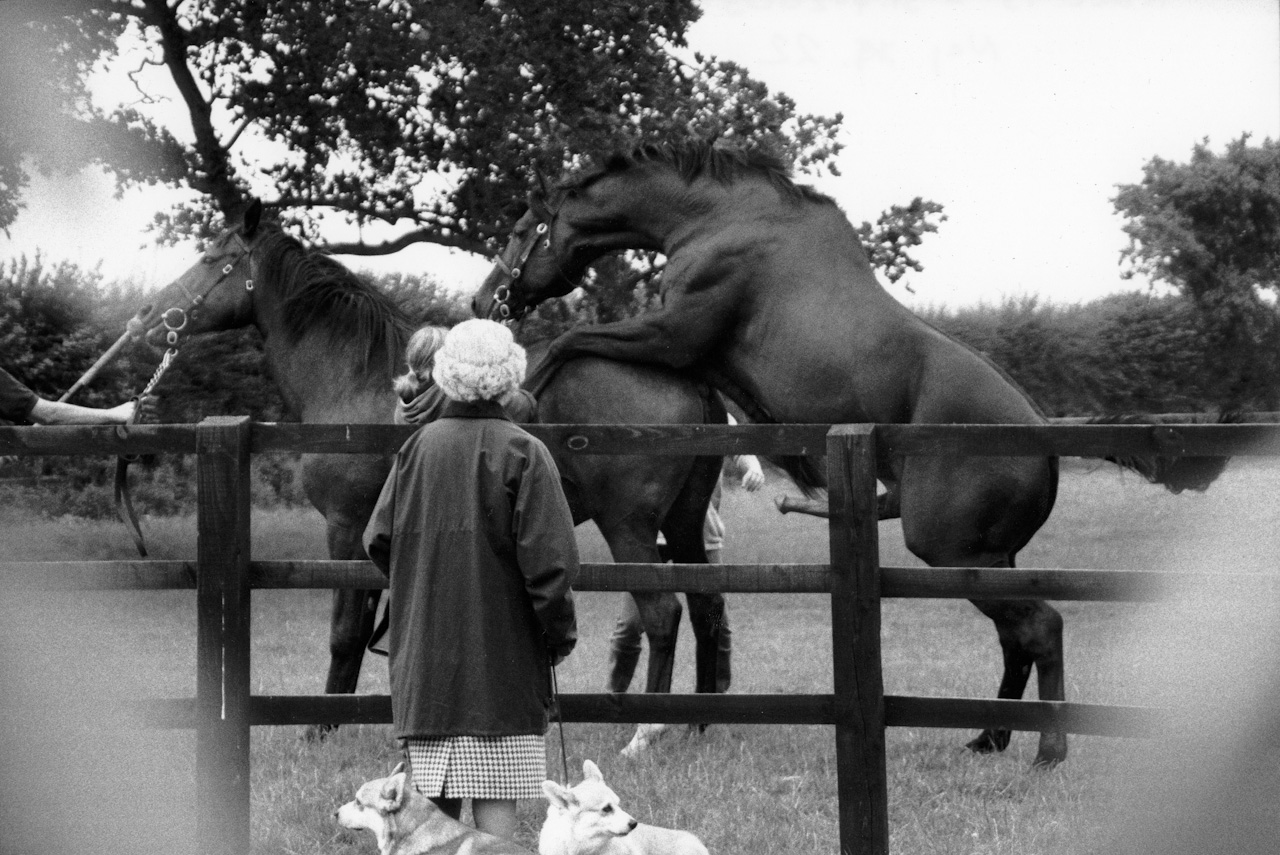 Alison Jackson: Queen Watches Her Horse Mate
